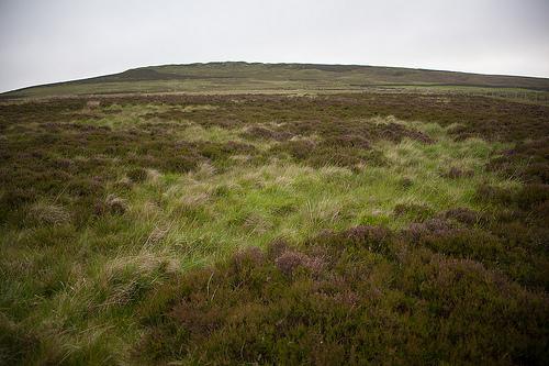 Bronze Age Urnfield