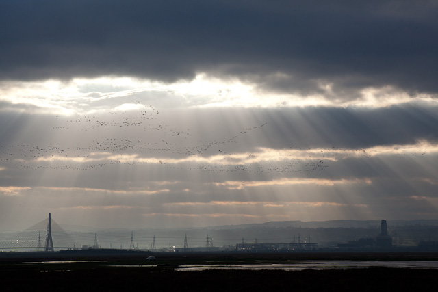 Geese over the Dee Marshes