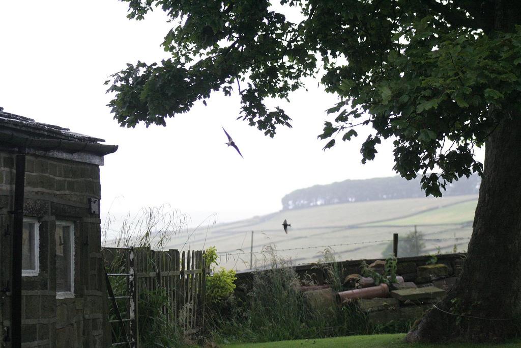 Swallows in garden
