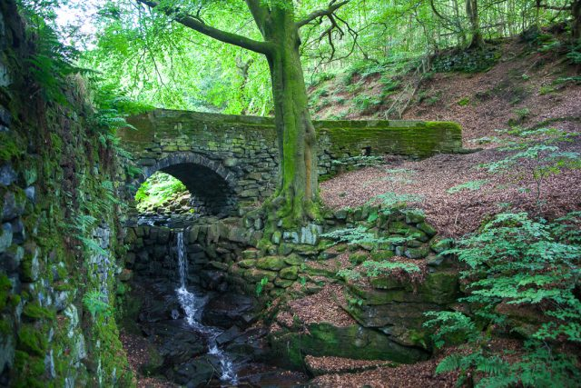 Packhorse bridge, Nutclough Wood