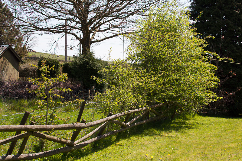 Our hedgerow