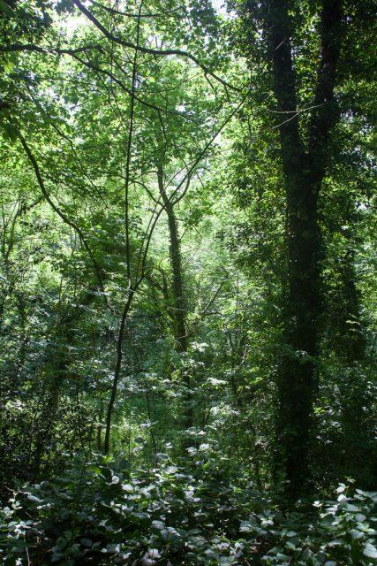 'Keswick Woods'