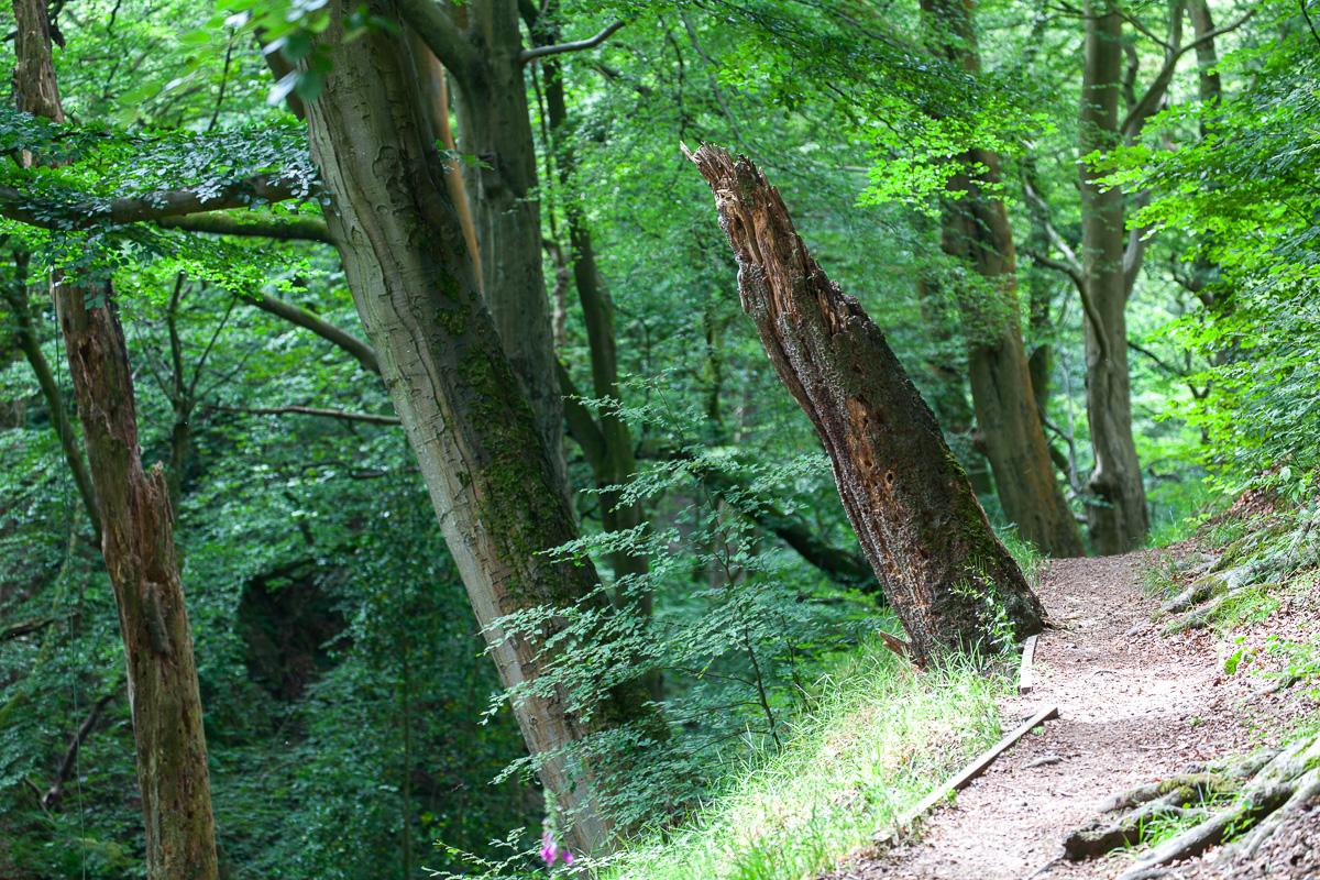 Nutclough Wood