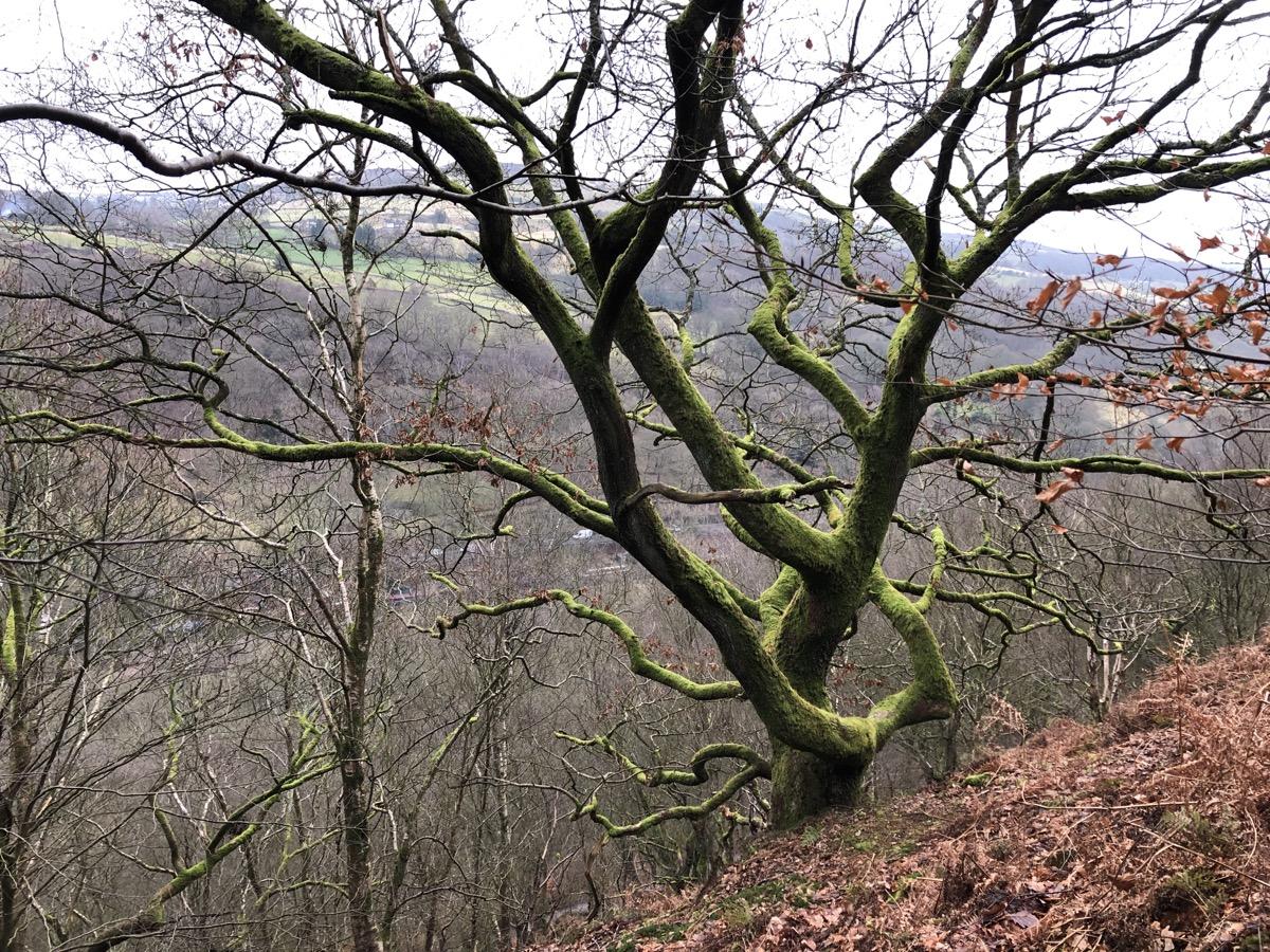 Crow Nest Wood